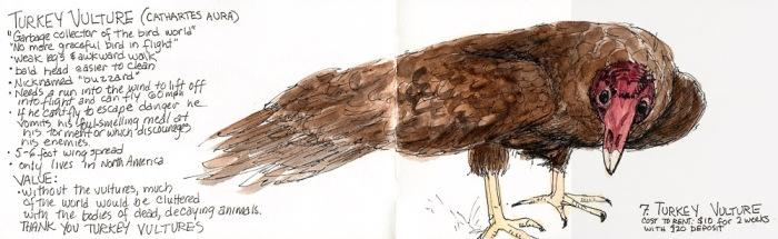 "Turkey Vulture: It's Value, ink & watercolor 5x16"""