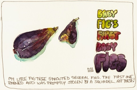 "Baby Fig's First Fruit, ink & watercolor, 5x8""; a watercolor sketch of a figs"