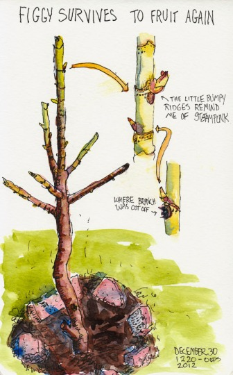 Ink and watercolor illustration of bare fig tree