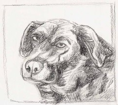 Cocoa Preliminary Sketch 1