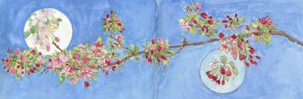 Flowering Crab Apple Branch, 2-page spread, ink, watercolor & gouache, 8x22""