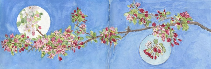 """Flowering Crab Apple Branch, 2-page spread, ink, watercolor & gouache, 8x22"""""""