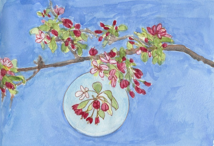 Flowering Crab Apple Branch, right page, ink, watercolor & gouache, 8x11""