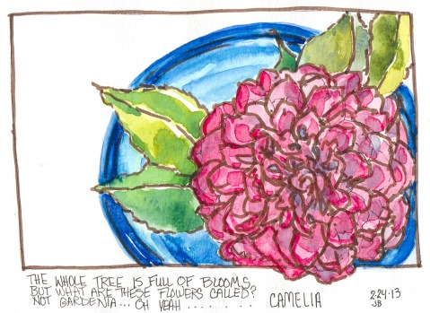 Camelia in Blue Bowl, ink & watercolor, 5x8""