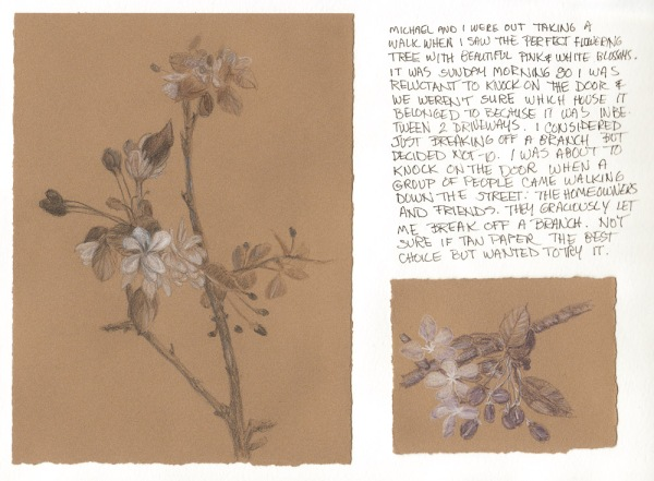 Crab Apple Blossoms with colored pencil sketch on tan paper