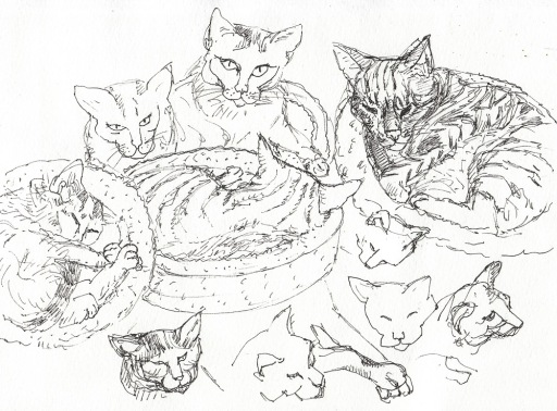 Warm up cat sketches to study them, ink, 8x11""