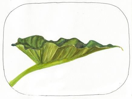 "Lily sketch #5, ink & watercolor, 8x10"""