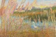 Marsh, sunny day