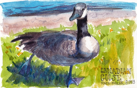 Canadian Goose, Knox Miller Park, ink and watercolor, 5x7 in