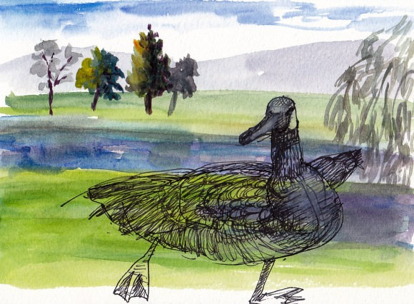 Knox Miller Goose, ink and watercolor 5x7 in