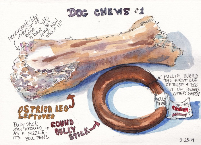 Dog Chews 1, ink and watercolor, 5x7 in