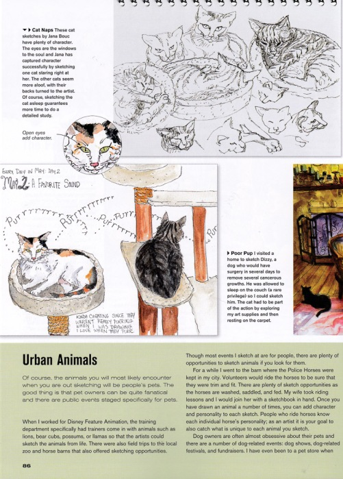 Urban Animals: My cat sketches