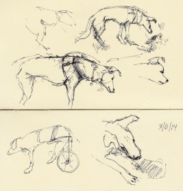 Dog on wheels at the dog park, ink in pocket Moleskine
