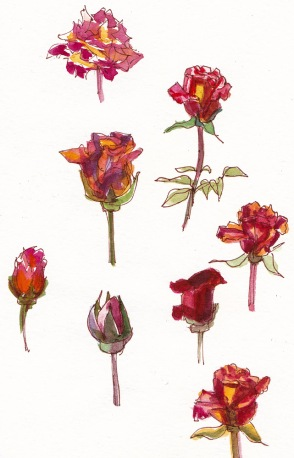 Little Rose Studies, ink and watercolor, 7.5x5.5 in
