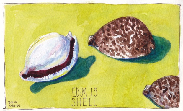 EDiM 13 Shells. Ink and watercolor, 5x7 in