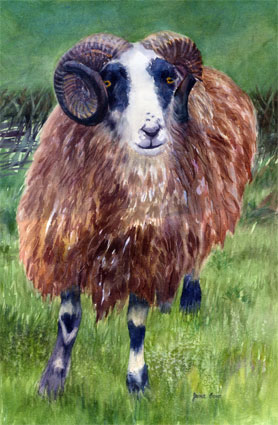 Howard's Creek Ram, Watercolor, 22x15 inches (Available)
