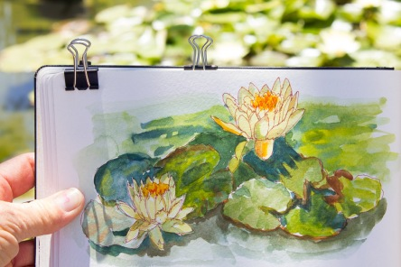 Water Lillies and their sketch at Bancroft Gardens, ink and watercolor, 5x8 in