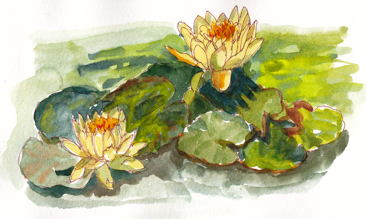 Water Lillies at Bancroft Gardens, ink and watercolor, 5x8 in