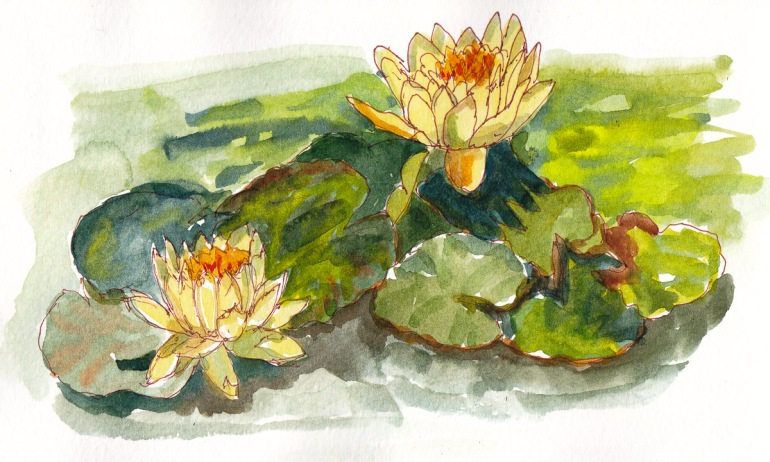 Water Lilies at Bancroft Gardens, sepia ink and watercolor, 5x8 in