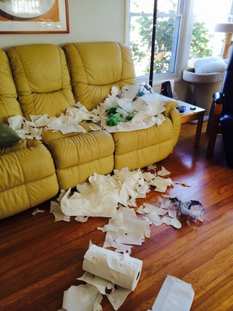 Living Room with 2 Rolls of Shredded Paper Towels