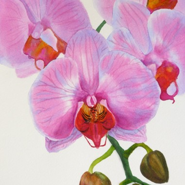 "Orchid painting #2 in watercolor, 8.5"" x 11.5"" Published in ""How to Paint Watercolor Flowers: Create Your Own Masterpiece in 6 Easy Steps."" Available for $350.00"