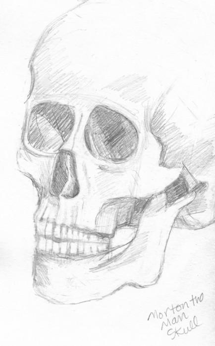 """Morton the Man Skull, graphite, 8x5"""""""
