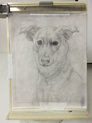 Millie-Reference Drawing, pencil on tracing paper