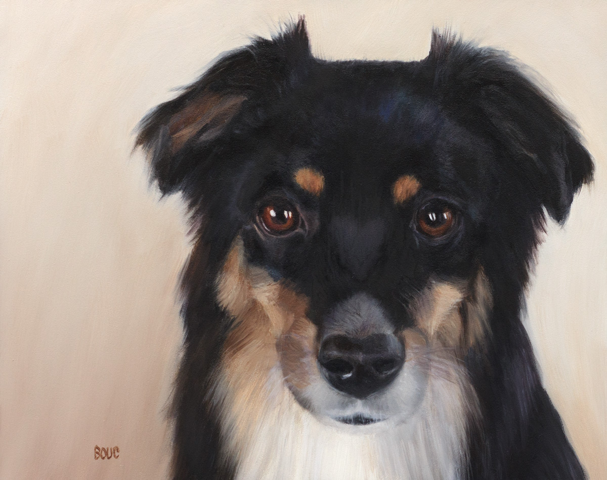 Whiskey, Portrait of Mini Aussie, oil on Gessobord panel, 8x10 inches