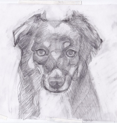 Preliminary sketch of Whiskey, graphite on vellum tracing paper, 8x10 inches