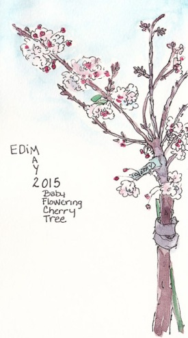 EDiM 2: Tree (Baby Cherry Tree), ink and watercolor, 4.5x8 in