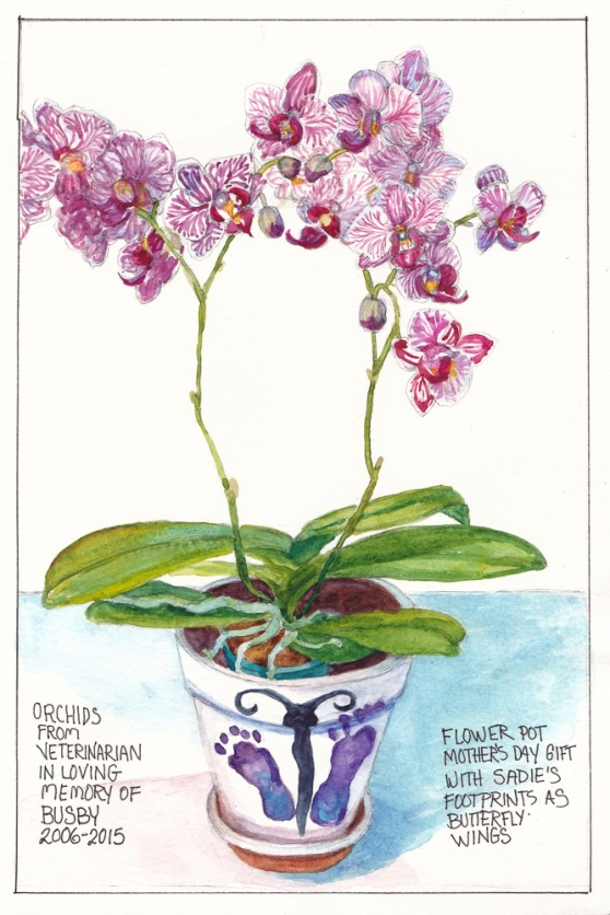 Orchid for Busby in Sadie Footprint Pot, graphite and watercolor, 11x7 in