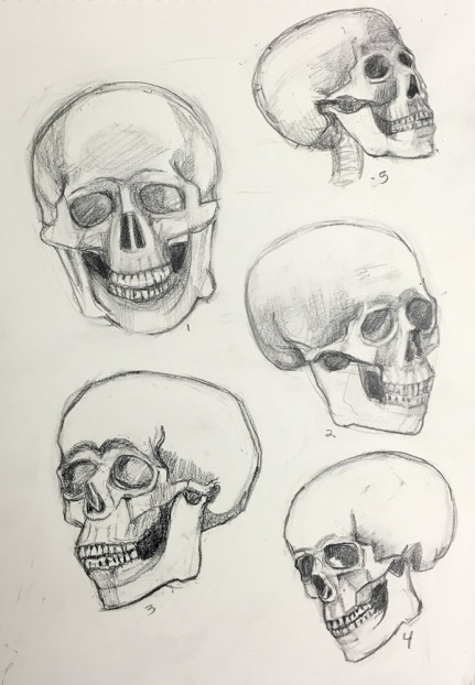 Skull drawing practice
