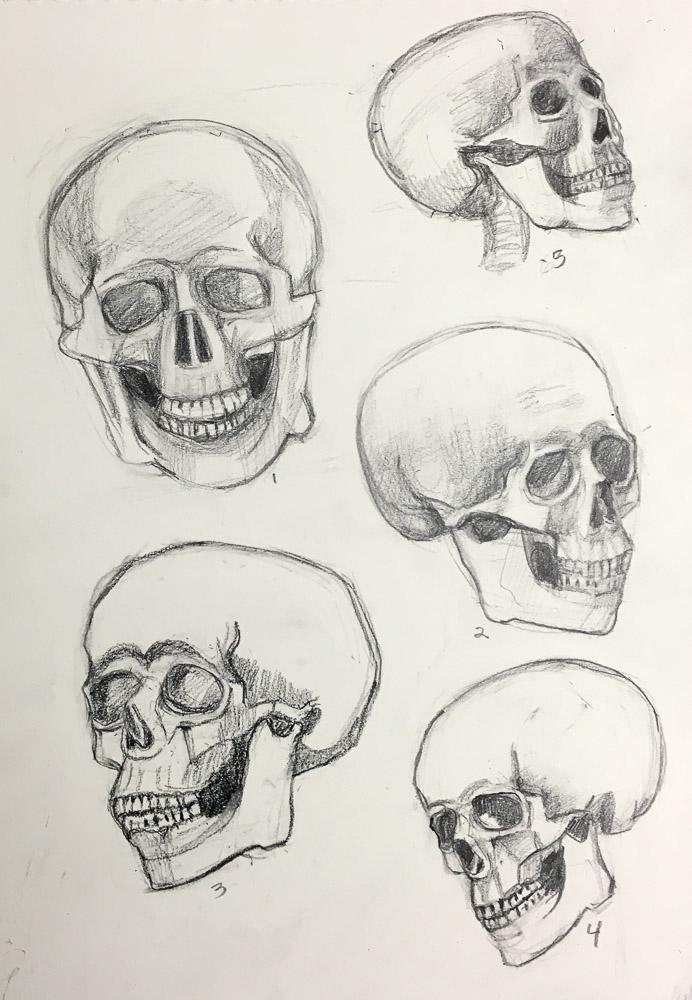 Skull drawing practice