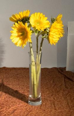 Sunflowers 1-B Photo Set up