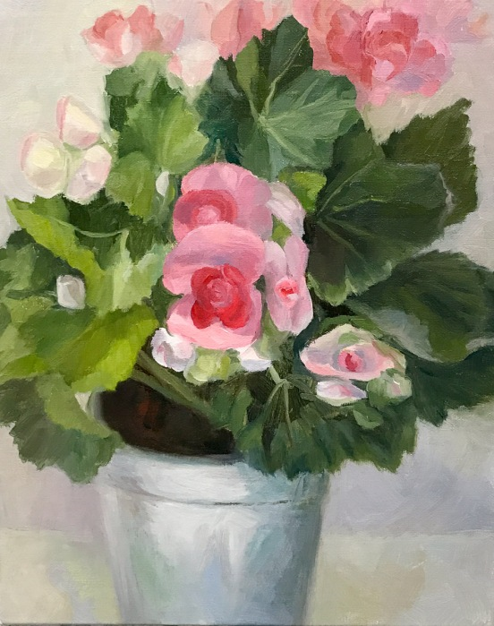 Winter Begonias in Tin Pot, WIP-C