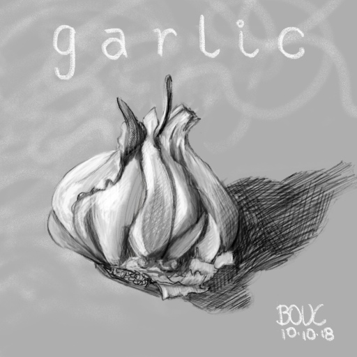 Bonus sketch of garlic in procreate